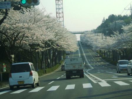 環状4号の桜〜2