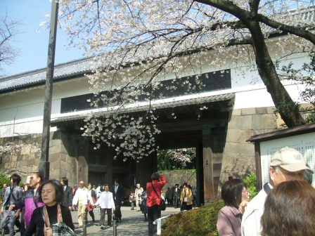 千鳥ヶ淵桜花見1