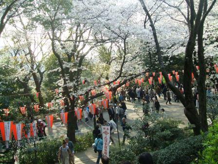 上野公園桜花見2