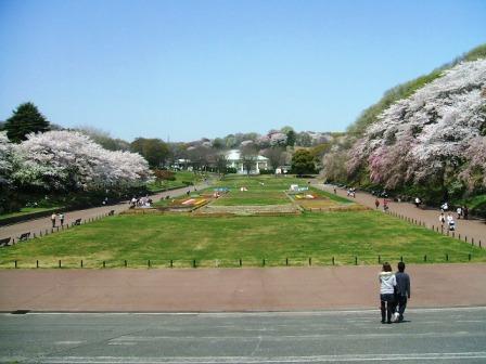 こどもの国の桜・花見3
