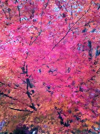 河口湖の紅葉5