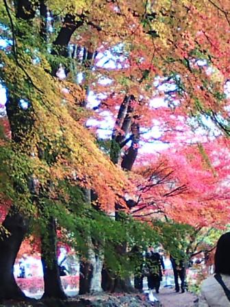 河口湖の紅葉7