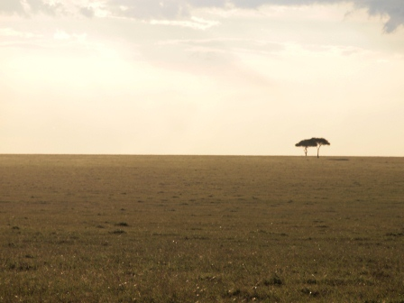 masaimara sepia