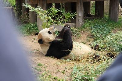 パンダの腹筋
