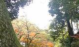 紅葉の坂道