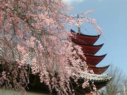 宮島の春 五重の塔
