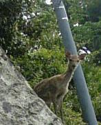 鹿:誰か来た?