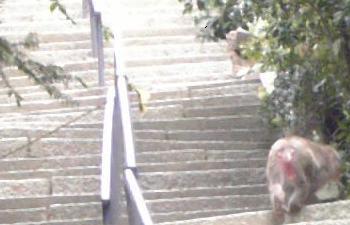 猿の親子(階段の上に子猿)