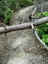 道2 木が倒れてる