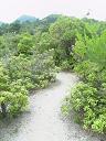 道4 新緑がきれい