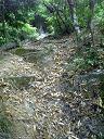 道5:落ち葉のじゅうたん
