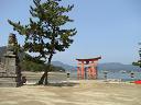 (^^)/ 宮島の大鳥居です