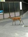 鹿さんは横断中!