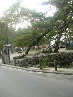 大元公園のテント村