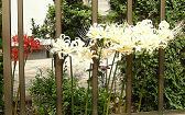 お庭の彼岸花