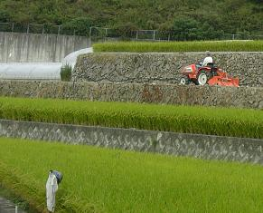 農作業中です