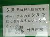 掲示板にタヌキ(・・?