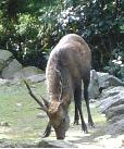 本堂前の鹿さん