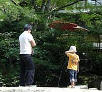 紅葉茶屋の池に鯉がいます