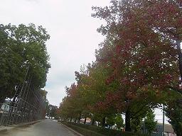 維新公園そばの並木道