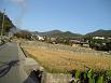 神社への道1
