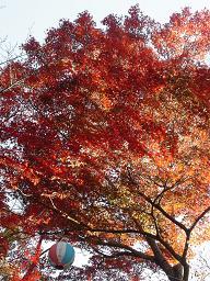 平松茶屋の紅葉