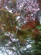 四宮神社付近の紅葉4