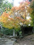 御山神社から本堂への道