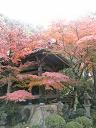 鐘堂の紅葉