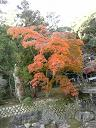 紅葉8−0