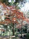 紅葉9−3