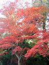紅葉4−3