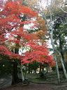 紅葉4−4