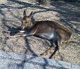 鹿リラックス