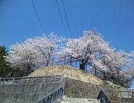 要害山は桜満開