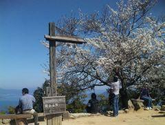 頂上の桜1
