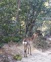 鹿さんに出会った