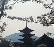 夕方の五重塔