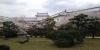 お庭の桜2