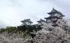 お城と満開の桜