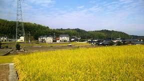 神社の傍の田んぼ