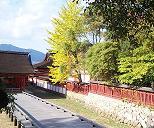 厳島神社の紅葉は?