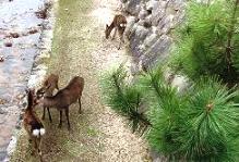 仲良しの鹿さん達