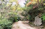 多宝塔から大聖院へ行く道