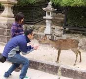 鹿さんと遊んでる