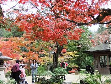 旅館岩惣のお庭