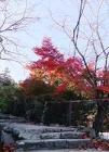 アセビ道:大願寺から多宝塔へ行く道