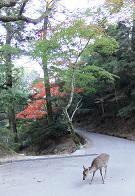 木比屋谷へ行く道2