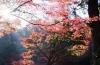 13木比屋谷公園の紅葉