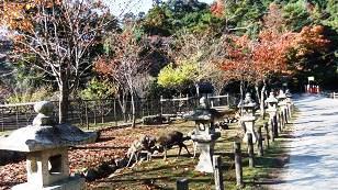 大元神社参道